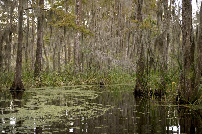 Download Swamp Near New Orleans, Louisiana Stock Image - Image: 12248057