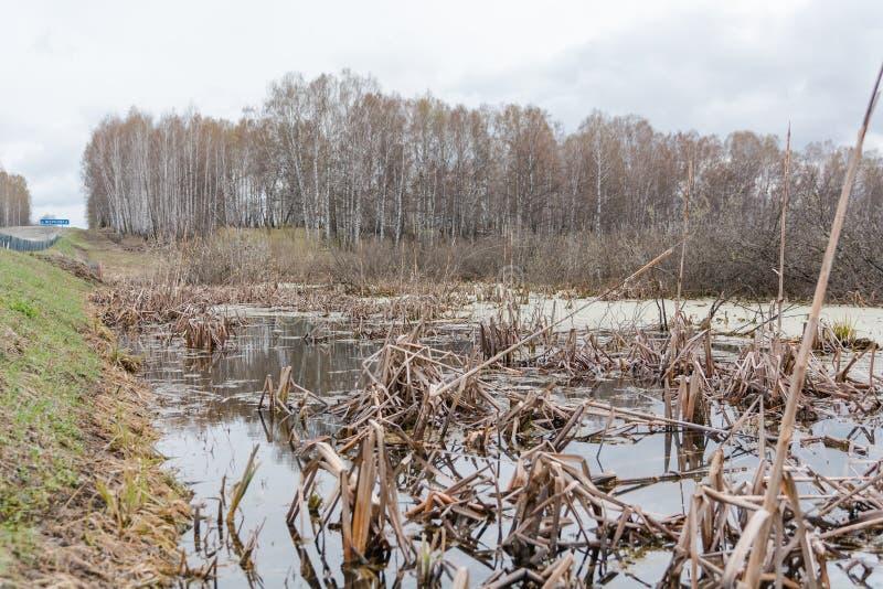 swamp O pântano na madeira Reservatório seco Tempo de Zasushlevy imagem de stock royalty free