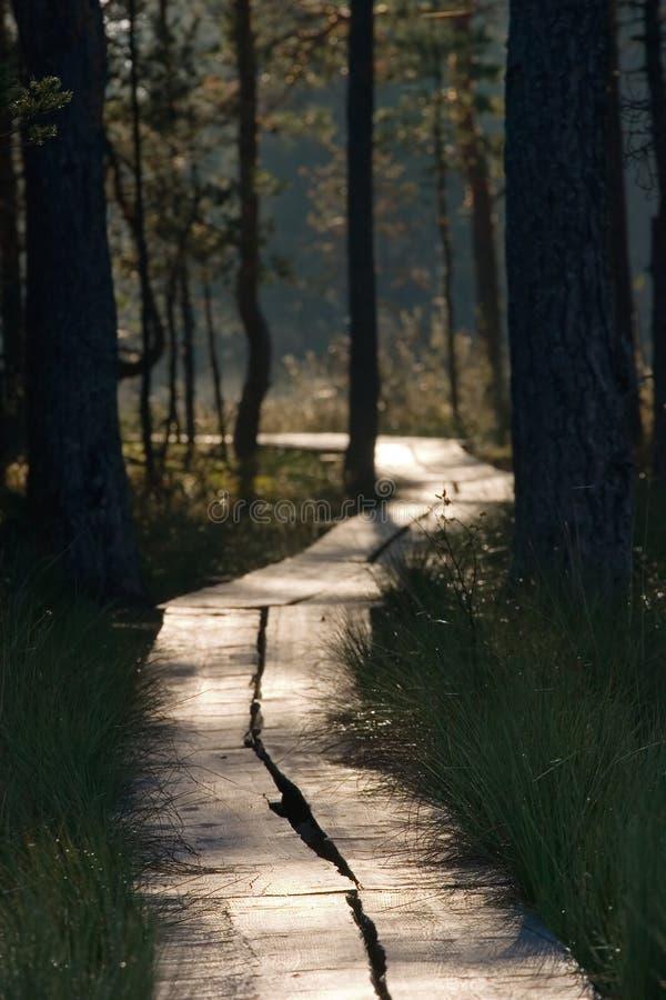 Free Swamp Path 1 Stock Photos - 2221873