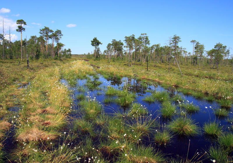 Download Swamp In The Siberian Taiga Stock Image - Image: 20258161