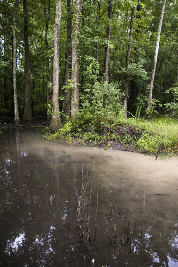 Swamp with soil runoff. A swamp or bayou deep in the heart of South Carolinas Low Country. The water is clouded with runoff from a recent heavy rain stock photo