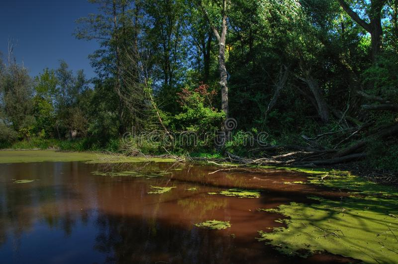 Swamp trees. Natural swamp lake billabong by the Moravia River in Czech Republic stock images