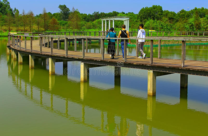 Swamp walkway of wetlandpark in hong kong stock images