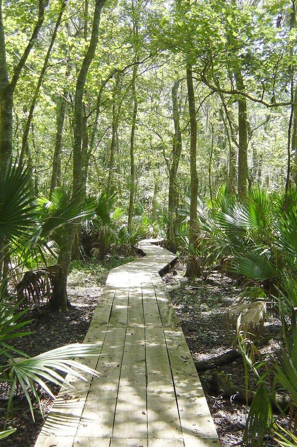 swampen går arkivbilder