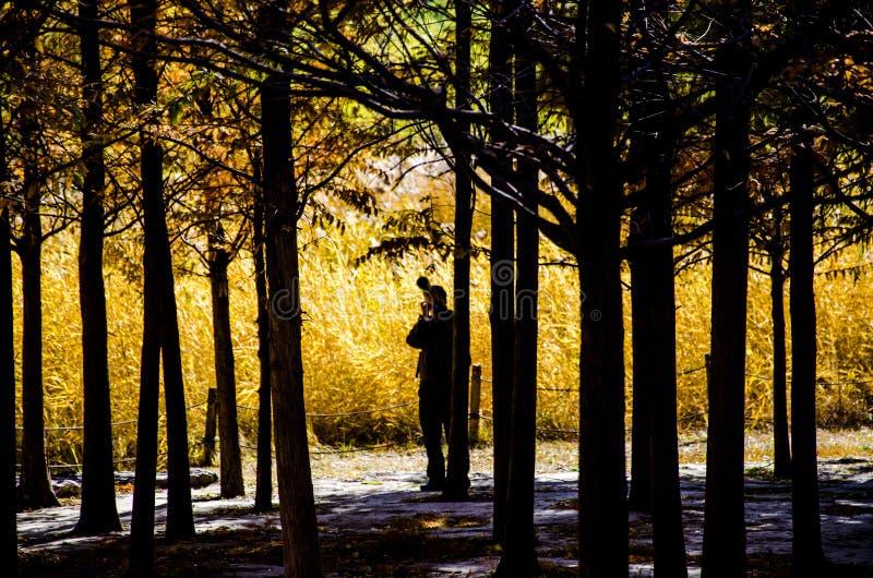 Swampland在秋天 免版税库存照片