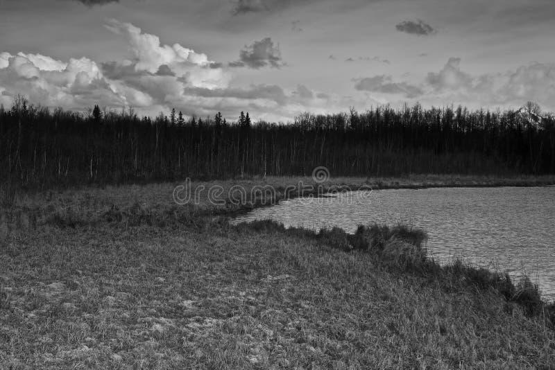 swampland stockbild
