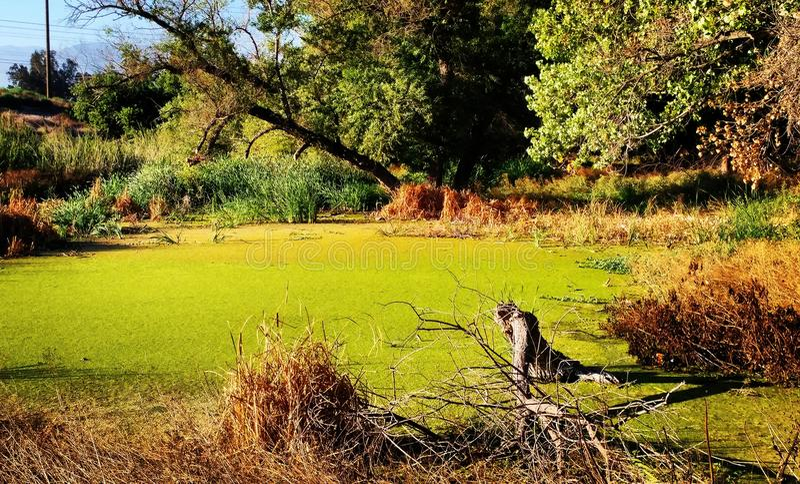 swampland photographie stock
