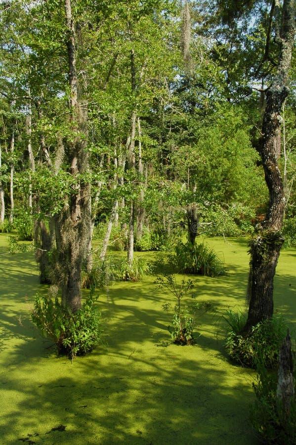 Swampland du sud de la Géorgie photographie stock libre de droits