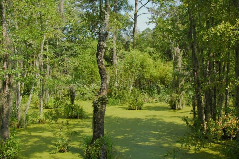 Swampland du sud de la Géorgie photo stock