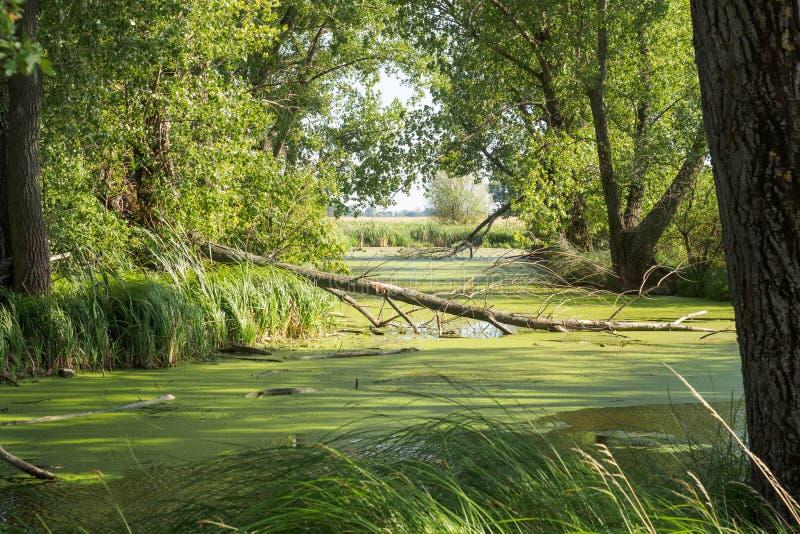 Swampland no delta do ` s do rio imagens de stock royalty free