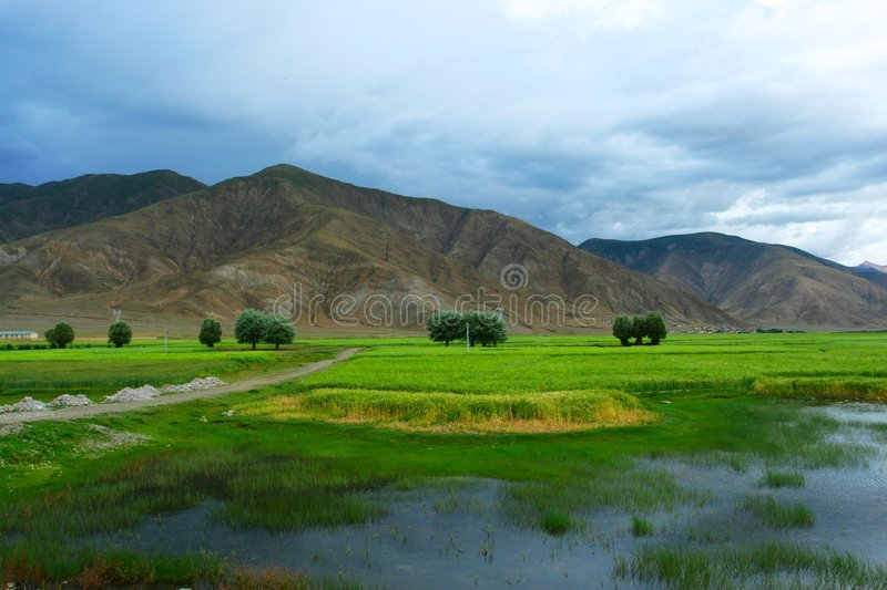 The Swampland Of Tibet Stock Photography