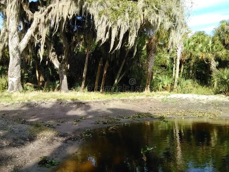 swamplands стоковые изображения rf