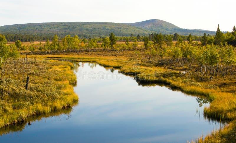 swamps imagens de stock royalty free