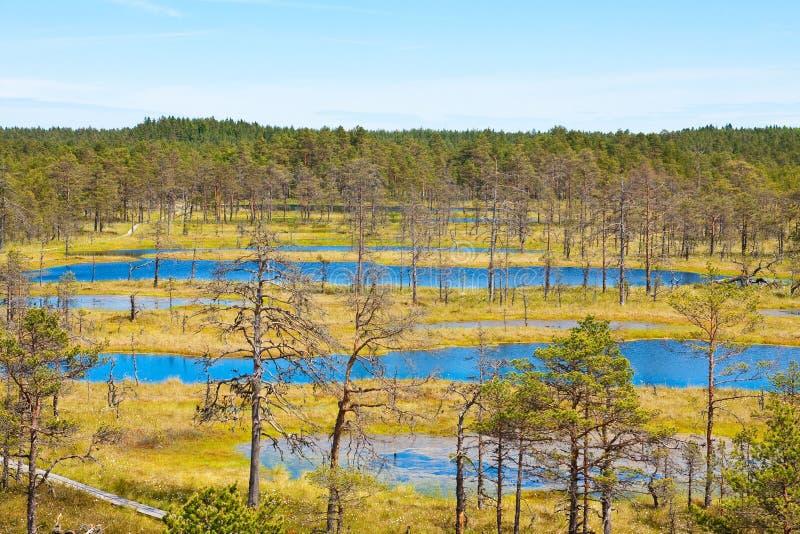 Swamps in Estonia 2. Nature trail Viru bog in the national park Lahemaa in Estonia stock photos