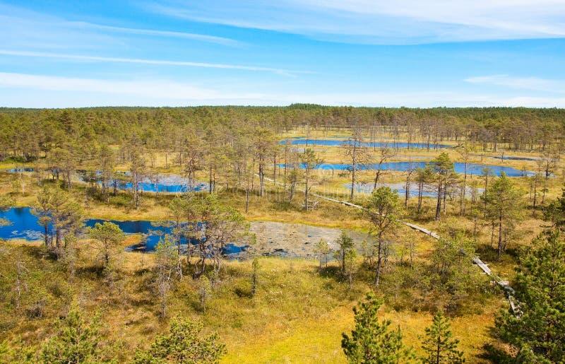 Swamps in Estonia. Nature trail Viru bog in the national park Lahemaa in Estonia royalty free stock images