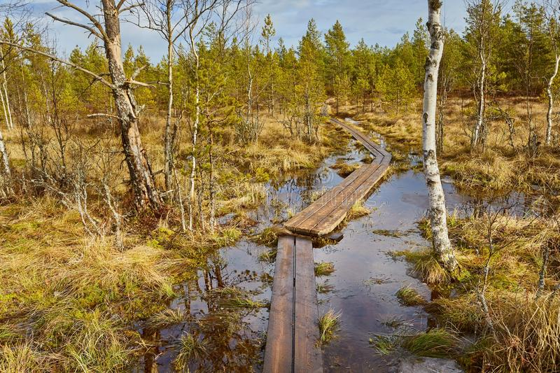 Swamps in Finland stock images