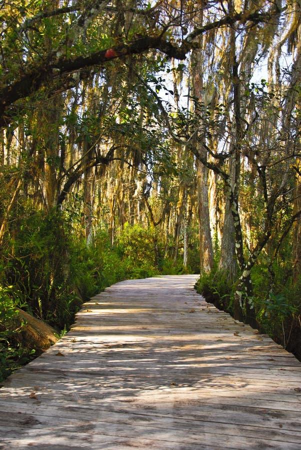 Swampy Pfad in den Sumpfgebieten stockbild