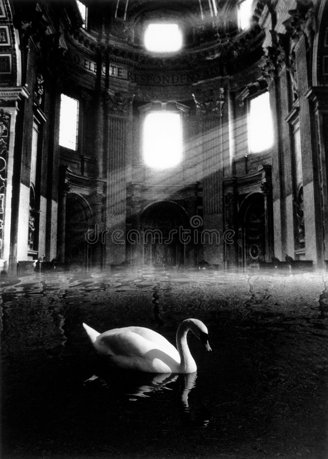 The swan royalty free stock images