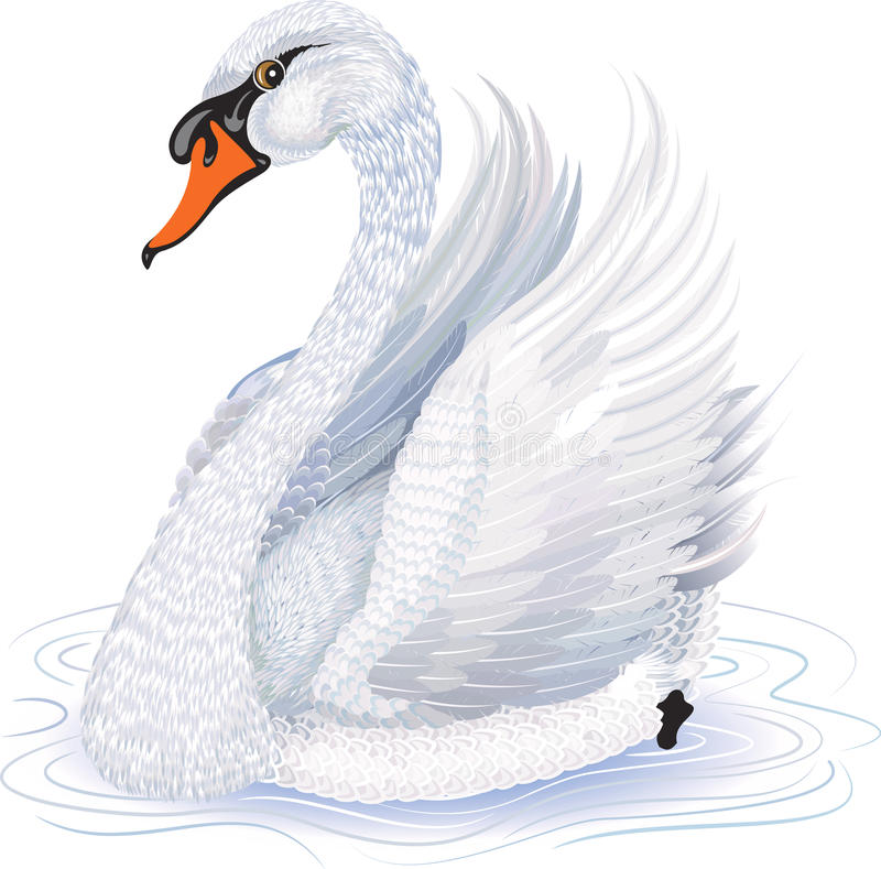 swan stock illustrationer