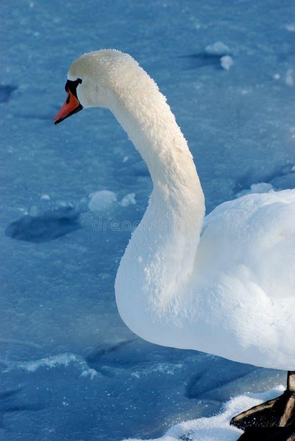 Download The swan stock image. Image of beautiful, serene, lake - 23427703
