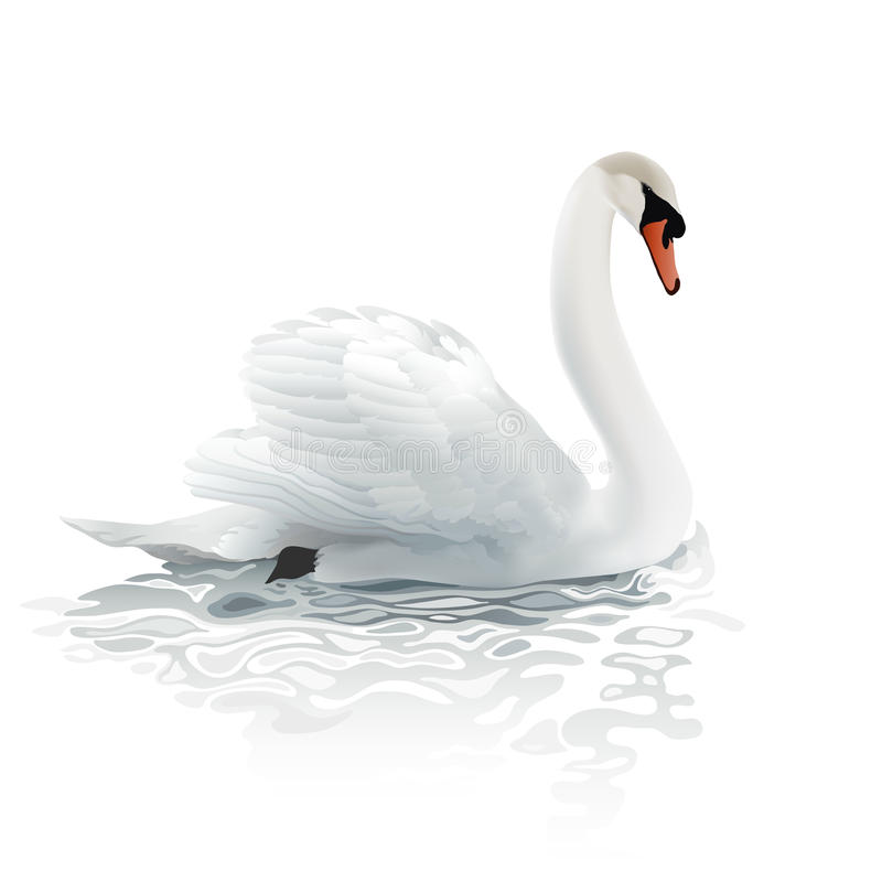 Free Swan. Stock Photo - 61722540