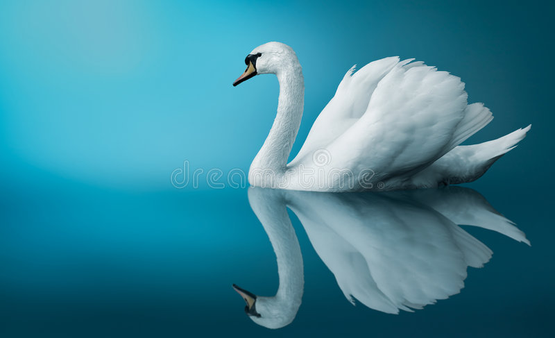 Download A Swan stock illustration. Image of mist, monochromatic - 8712159
