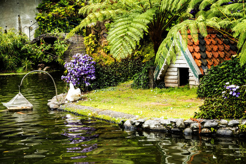 Swan in a Beautiful Garden at Monte above Funchal Madeira. This wonderful garden is at the top of the cablecar from the seafront in Funchal. It is filled with royalty free stock photography