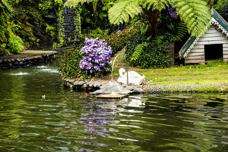 Swan in a Beautiful Garden at Monte above Funchal Madeira. This wonderful garden is at the top of the cablecar from the seafront in Funchal. It is filled with royalty free stock images