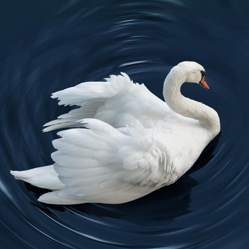 Download Swan stock image. Image of feather, lake, profile, purity - 34458305