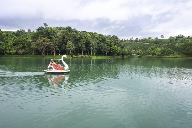 Swan boat in Dambri lake stock images
