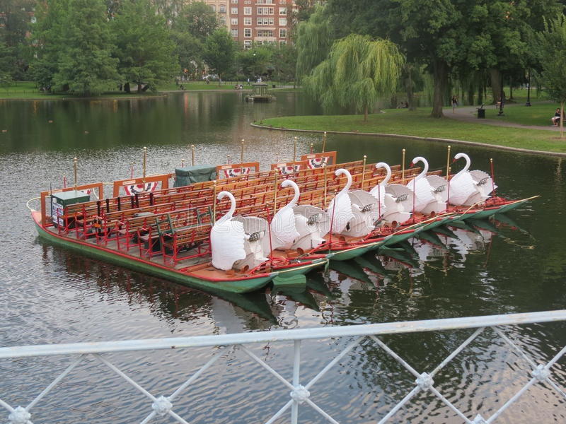 The Swan boats royalty free stock image