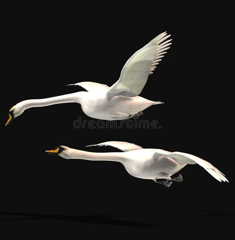 Swan flying stock illustration