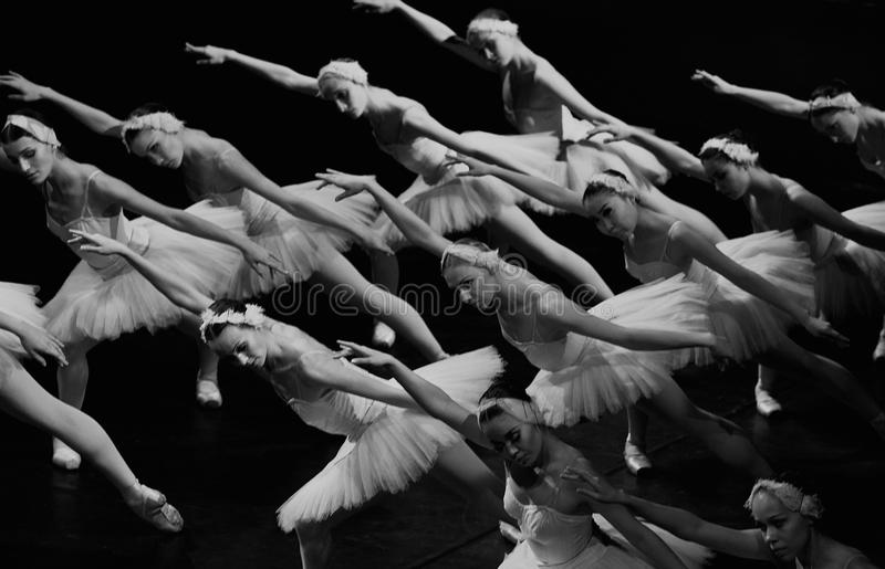 Swan girls swiming stock photography
