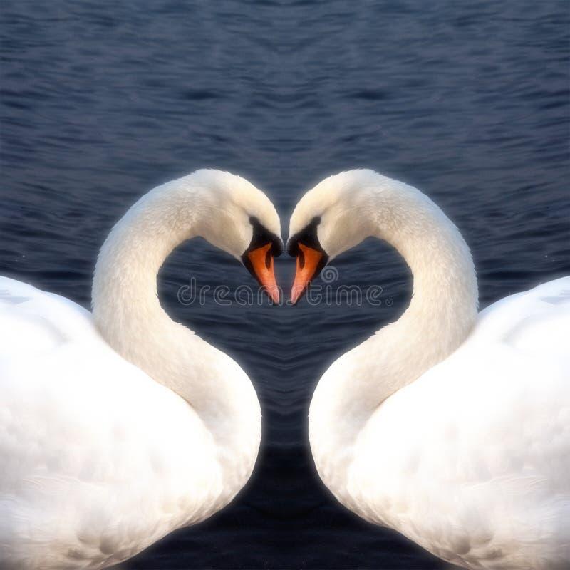 Free Swan Heart Stock Image - 26493231