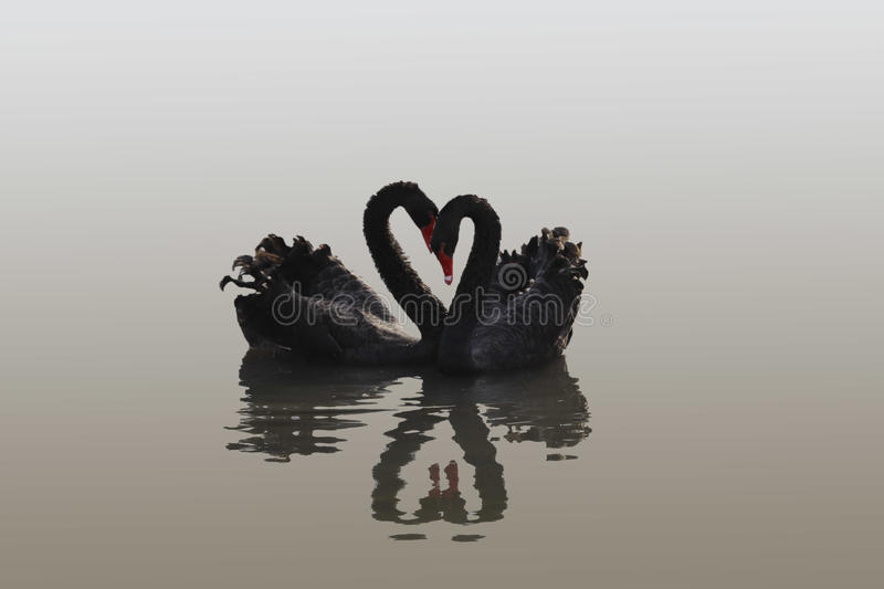 Swan heart stock photography