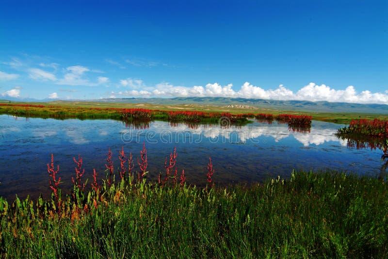 Download Swan Lake stock image. Image of asian, white, nature, china - 4721951