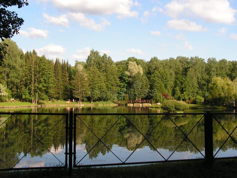 Swan lake Landskapomr?de i str?larna av inst?llningssolen royaltyfri fotografi
