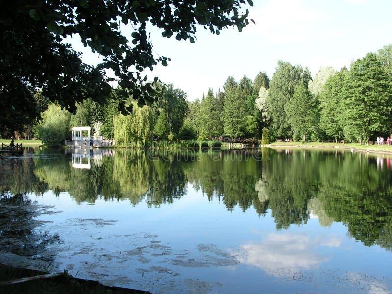 Swan lake Landskapomr?de i str?larna av inst?llningssolen arkivbild