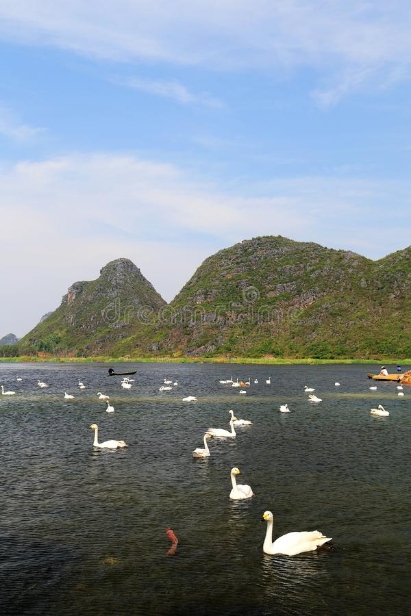 The Swan Lake in Puzhihe Scenic Area. Puzhihe Scenic Area is a typical karst landform, which is famous for its six landscapes: water garden, Lake peak forest, Yi royalty free stock photography