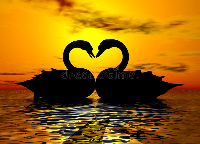 Swan Love in the Sunset royalty free stock photo