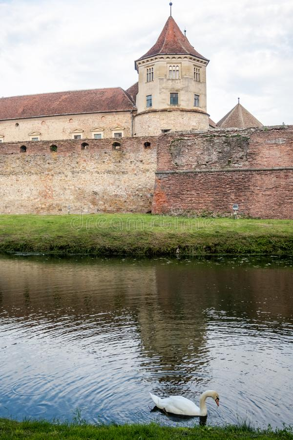 Swan in the moat of medieval Fagaras fortress, Brasov, Romania royalty free stock photography