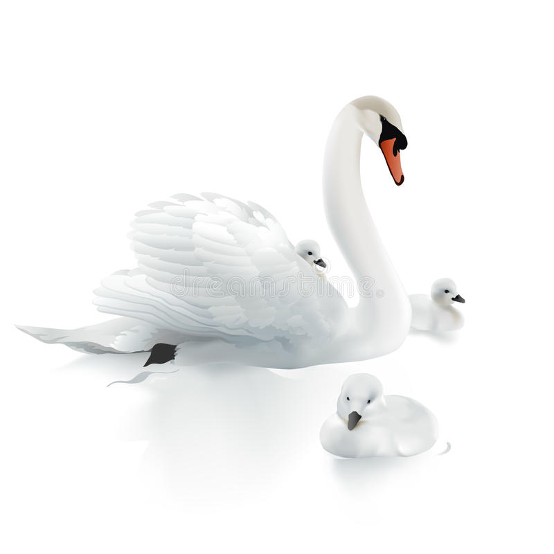 Free Swan Mother And Swanlings. Royalty Free Stock Photo - 61722475