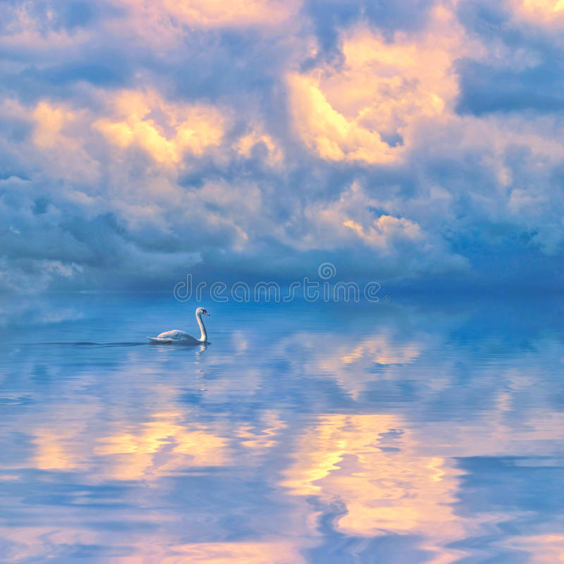 Swan moving on calm blue lake against a picturesque cloudy sky royalty free stock photos