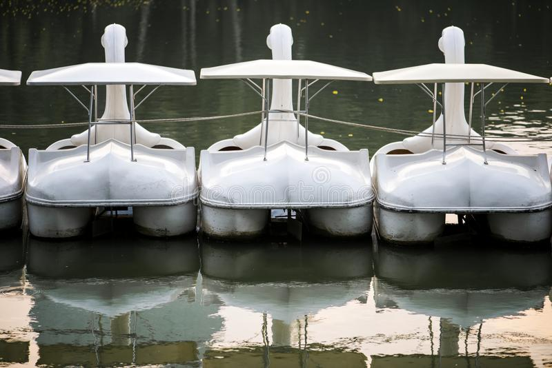Swan paddle boats in a lake stock image