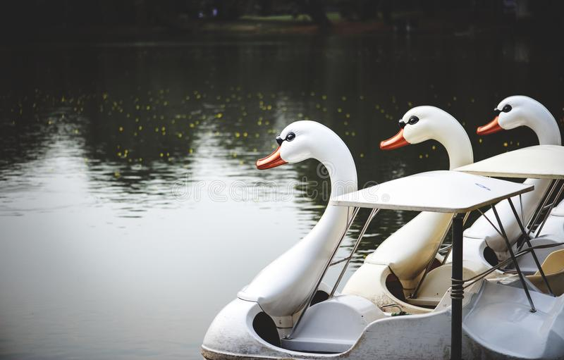 Swan paddle boats in a lake royalty free stock photo