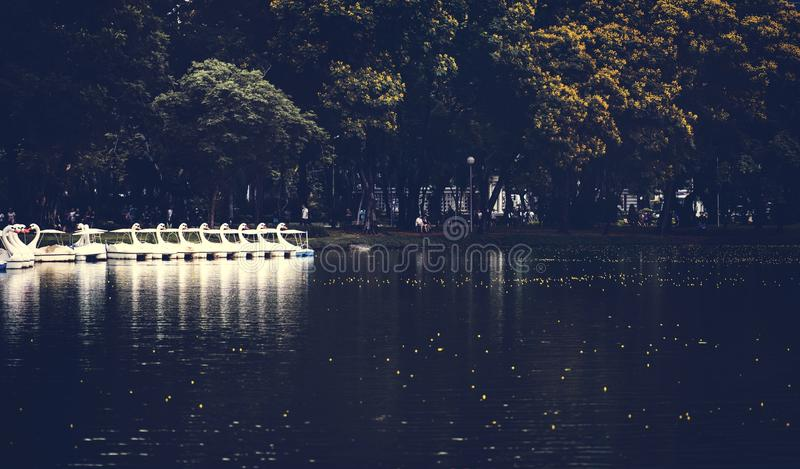 Swan paddle boats in Lumphini Park, Bangkok royalty free stock photo