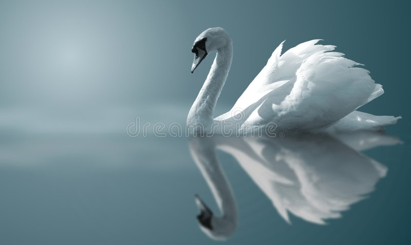 Download Swan Reflections stock photo. Image of winged, white, arts - 8298