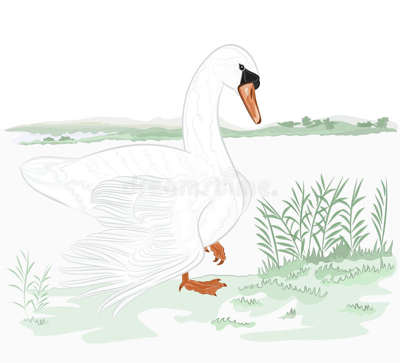 Download Swan on the shore of lake stock vector. Illustration of swamp - 39515133