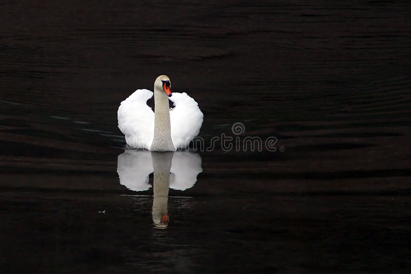 Swan slide royalty free stock photo