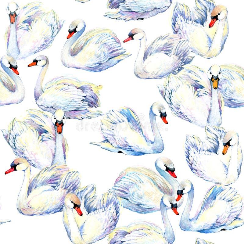 Swan Svanvattenfärgteckning Sömlös modell för svanflock royaltyfri illustrationer